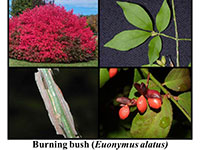 burning bush examples