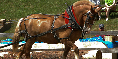 a show horse pulling a cart