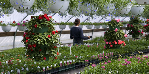 inside a flower nursery